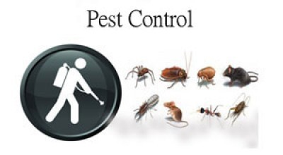 Cheap Pest Control Serevices