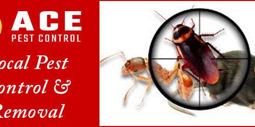 Pest Control Brisbane 1 1