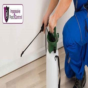 Professional Pest Control Service Brisbane 4