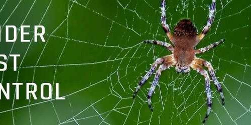 Spider Pest Control Brisbane 1