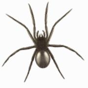 Cropped Pest Control Logo 1 180x180 Jpg