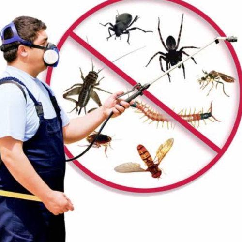 Nfs Pest Control Services College Road Nashik Herbal Pest Control Services Bkgewwdy41